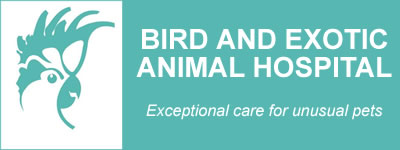 Bird and Exotic Animal Hospital